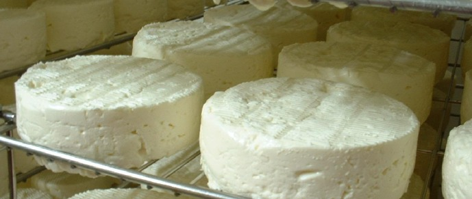 Fresh cheese on trays ( Gaugry cheese factory)